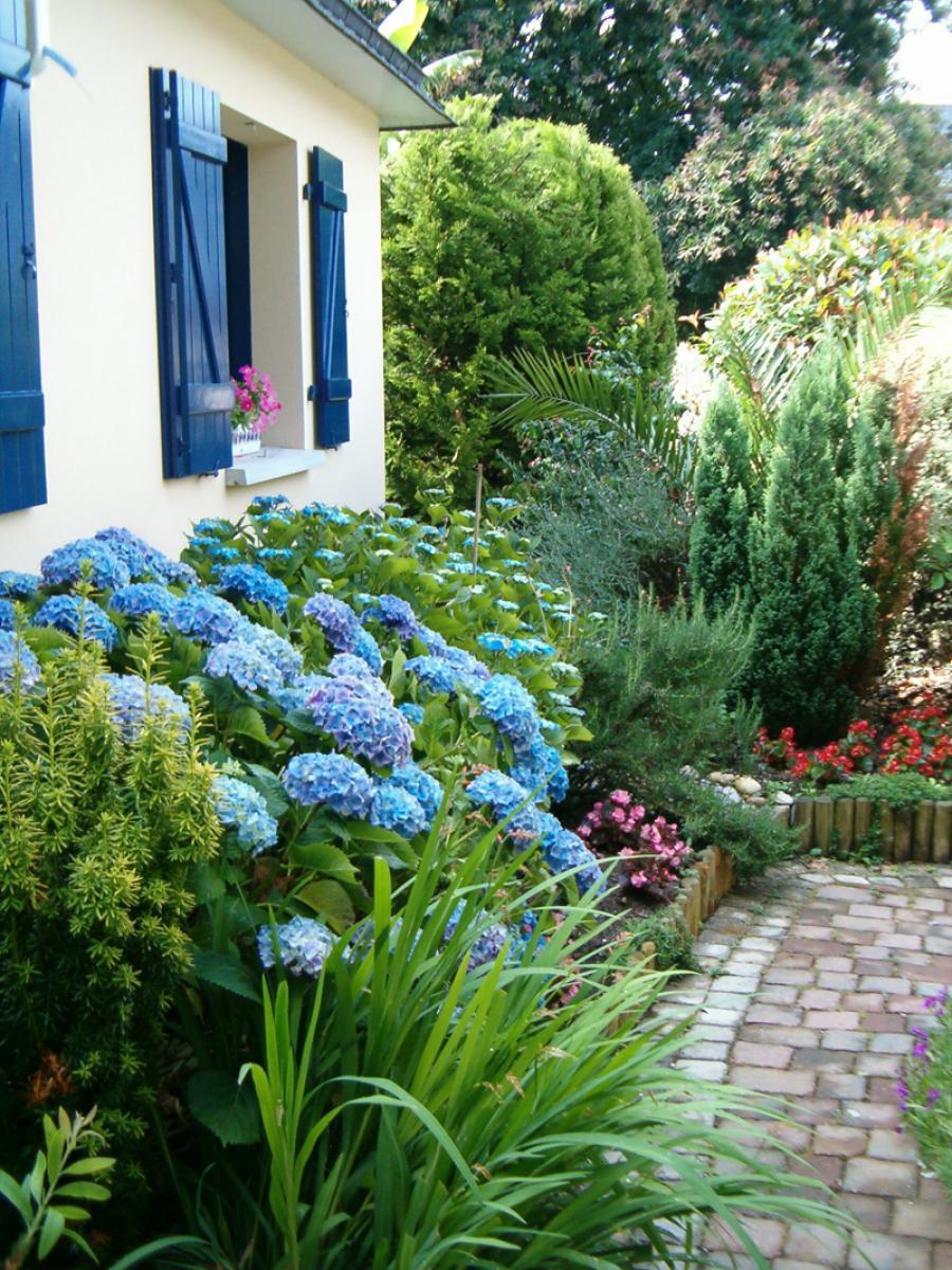 L 39 hortensia golfe du morbihan location appartement - Terre pour hortensia bleu ...